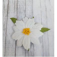 Пуансетия белая, 6 см, 1 шт