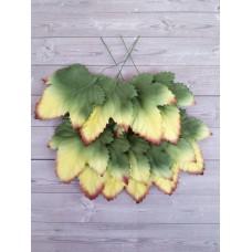 Листья желто-зеленые с коричневым краем 6х6 см., 10 шт.